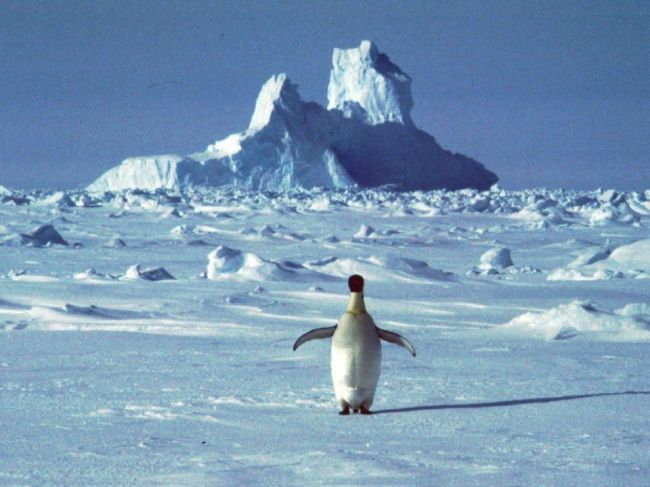 V Antarktíde zaznamenali rekordnú teplotu