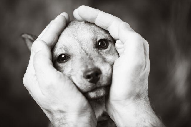 Psy môžu byť kľúčom k pochopeniu a liečbe rakoviny mozgu