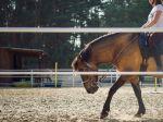 Kone pomáhajú zdravotne znevýhodneným deťom, tie sa učia o ne starať