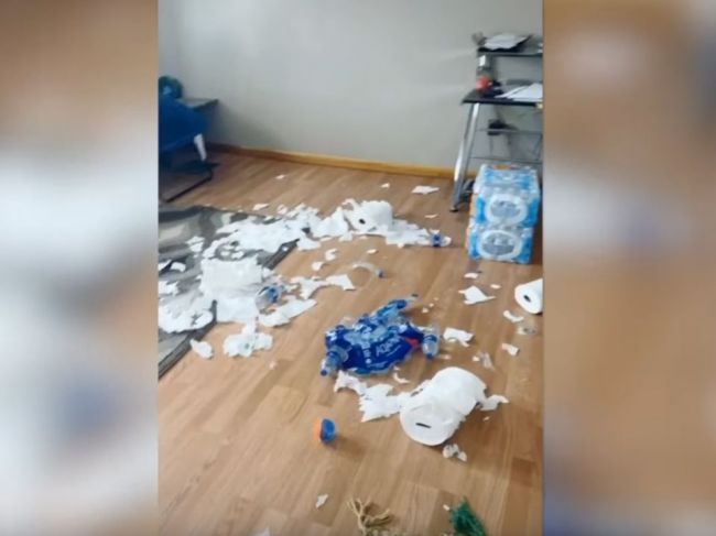 Video: Žena si nakúpila zásoby pre prípad karantény. Takto si s nimi poradil jej pes