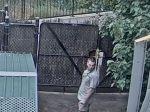 Video: Kamera snímala žirafy v zoo. Zachytila však, čo robí tento ošetrovateľ