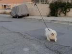 Video: Muž našiel spôsob, ako vyvenčiť psa počas karantény