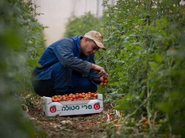 Viac ako 200.000 ľudí vo Francúzsku chce pomôcť farmárom so zberom úrody