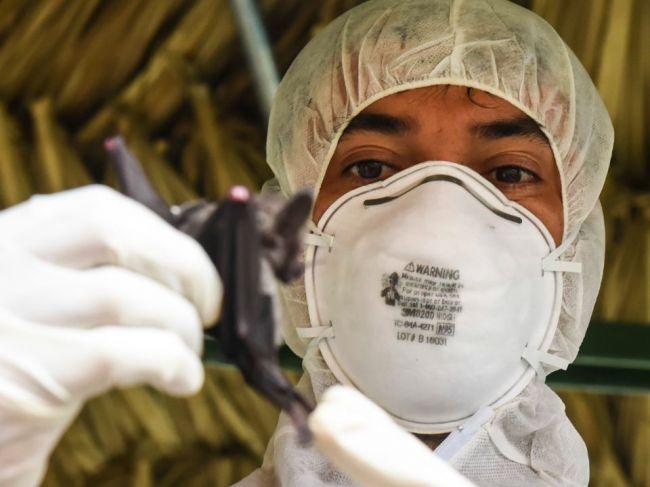 U netopierov našli 6 nových koronavírusov