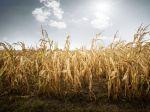 Rok 2020 bude najteplejší v histórii, zhodujú sa klimatológovia