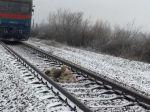 Video: Vlak sa rútil na zraneného psa, kamarát sa rozhodol ho ochrániť