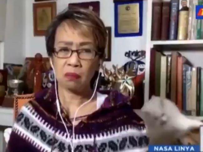 Video: Za chrbtom reportérky sa pobili mačky. Zachovala sa ako skutočný profesionál