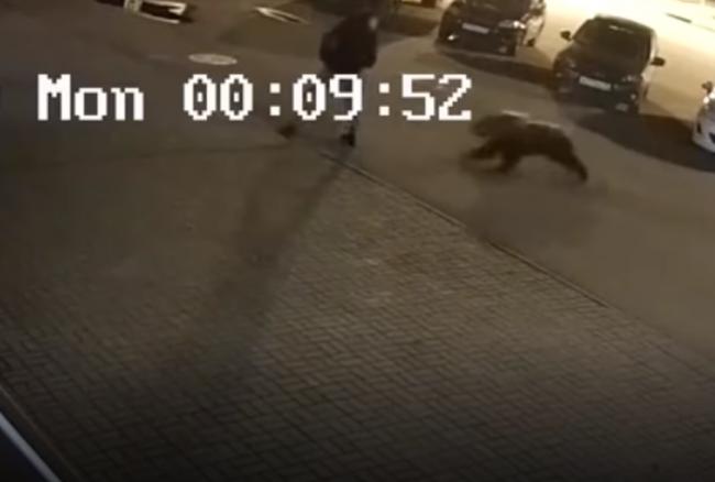 Video: Muža na ulici napadol medveď. Neuveríte, čo urobil potom