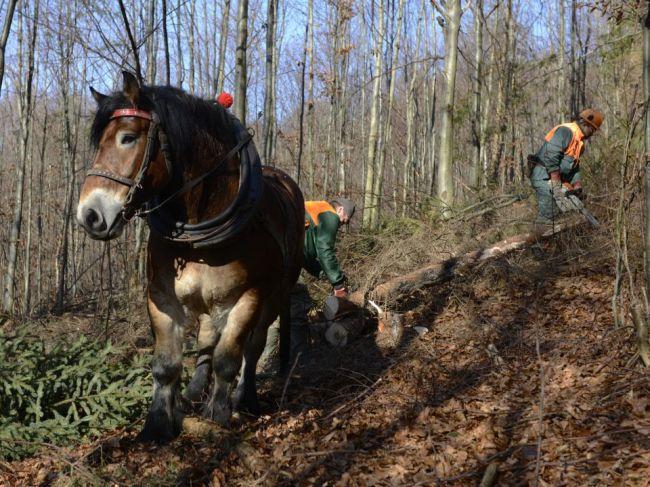 Mičovský: Do slovenských lesov potrebujeme viac koní