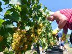 Situácia v slovenskom sektore vína je veľmi komplikovaná, kritická a napätá
