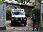 Levy v zoo napadli a ťažko poranili ošetrovateľku