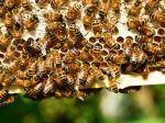 Ochranu včiel podporujú SaS aj Sme rodina, OĽaNO súhlasí s návrhmi J. Budaja