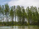 NAKA zadržala desiatky ľudí v súvislosti s korupciou v štátnych lesoch
