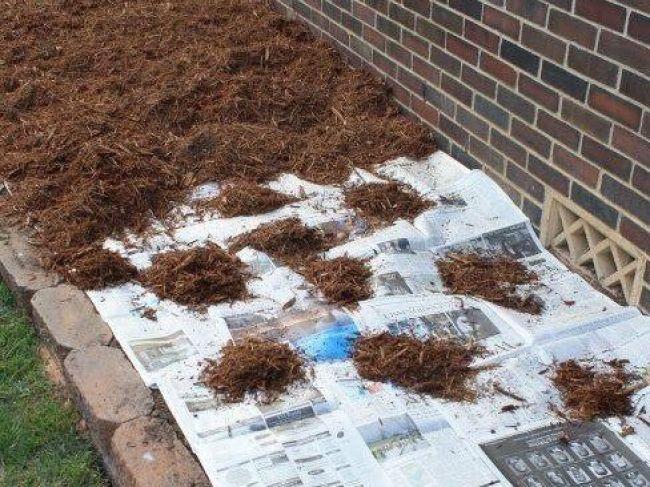 Žena našla jednoduchý spôsob, ako sa zbaviť buriny v záhrade