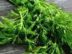 Kôpor: Zdravotné účinky, skladovanie, vedľajšie účinky a ako ho v kuchyni využiť