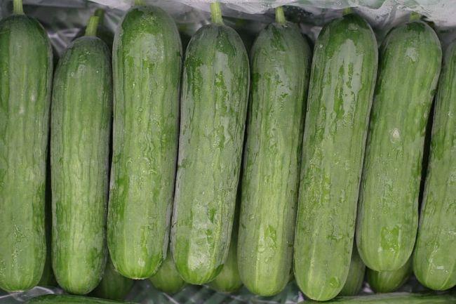 Najväčšia chyba pri skladovaní uhoriek: Kvôli tomuto uhorka zmäkne a hnije