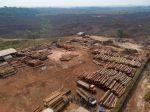 Odlesňovanie amazonského pralesa sa oproti minulému roku zvýšilo o 25 percent