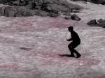 """Video: V Alpách sa objavil """"melónový sneh"""". Podľa vedcov to neveští nič dobré"""