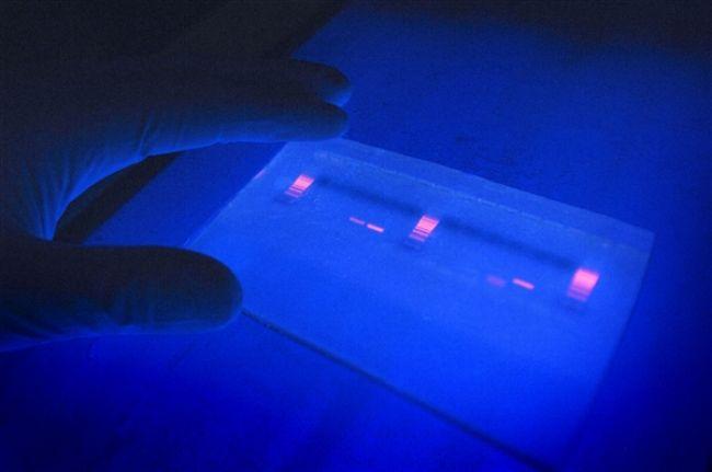 Dokáže UV svetlo ničiť koronavírus? Vedci overili jeho účinky