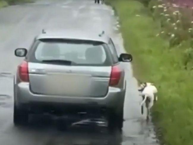 Video: Polícia pátra po bezcitnom majiteľovi. Svojho psa nechal behať popri aute