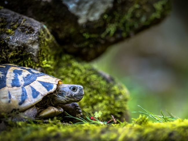 Salmonelózou sa možno nakaziť aj od zvierat ako korytnačka či had