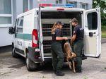 Polícia hľadá nové policajné psy