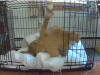 Video: Majitelia nastavili kameru na psa, prekvapilo ich však, čo s ním robí kocúr