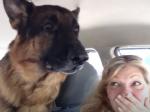Video: Nemecký ovčiak si zrazu uvedomil, že prišli k veterinárovi