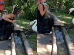 Video: Labuť dala žene jasne najavo, ako sa správne nosí rúško