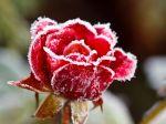 Kvety na balkónoch viac nenechávajte, najbližšie noci budú výrazne chladnejšie