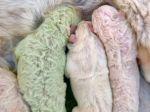 Video: V Taliansku sa narodilo jedinečné šteniatko