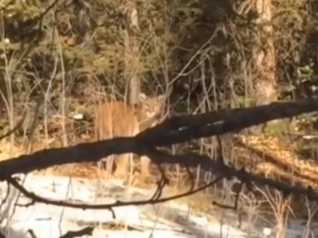 Video: Mladá žena si hravo poradila s útočiacou pumou