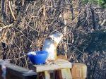 Video: Žena dala veverici nechtiac príliš staré hrušky. Takáto sa vrátila ku kŕmidlu