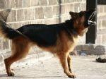 Otravuje vás brechanie susedovho psa? Vyskúšajte tieto kroky
