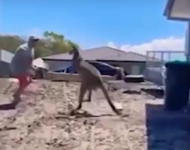 Video: Otec chcel chrániť deti pred kengurou, takúto reakciu však nečakal