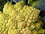 Kôrnatenie tepien: Tento typ zeleniny zabráni kalcifikácii ciev a aorty