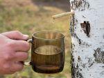 Brezová voda: Zázrak z lesa nadupaný vitamínmi. S čím všetkým vám pomôže?