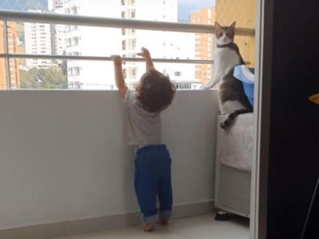 Video: Malý chlapec sa nebezpečne naťahoval k zábradliu balkóna. Takto zareagoval kocúr