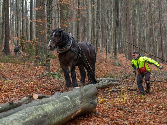 Situácia na trhu s drevom sa v celej Európe mimoriadne vyhrotila