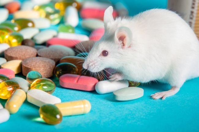 Toto je dôvod, prečo niektoré lieky na rakovinu fungujú na myšiach, no nie na ľuďoch