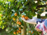 Pričastá konzumácia tohto ovocia zvyšuje riziko melanómu o 63 percent