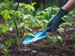 Čím kŕmiť rastliny? Len voda nestačí, na rast sú potrebné tieto tri živiny