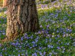 Aké rastliny zasadiť pod strom? S týmito ôsmimi nič nepokazíte