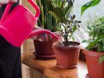5 chýb, ktoré opakujeme pri polievaní rastlín