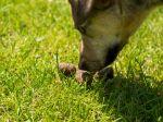 7 dôvodov zvláštneho správania psa