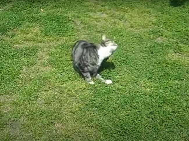 Video: Toto predvádza mačka, keď sa chce dostať dovnútra
