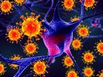 Koronavírus môže zrejme infikovať aj mozgové bunky