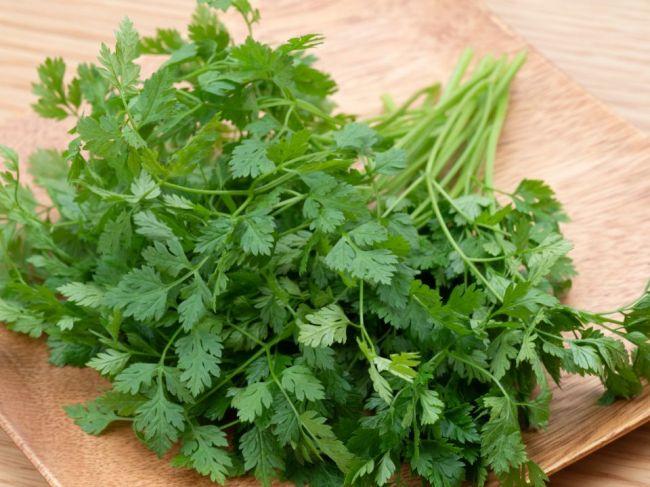 Trebuľka voňavá: Liečivá a chutná bylina, ktorú si môžete sami vypestovať