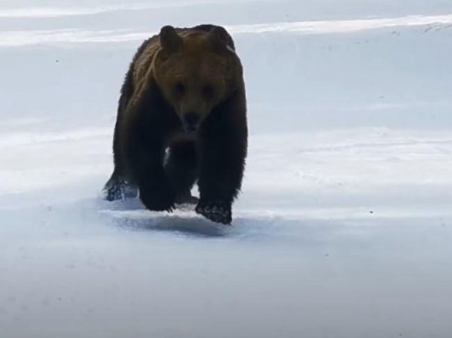 Video: Na lyžiara sa rútil medveď