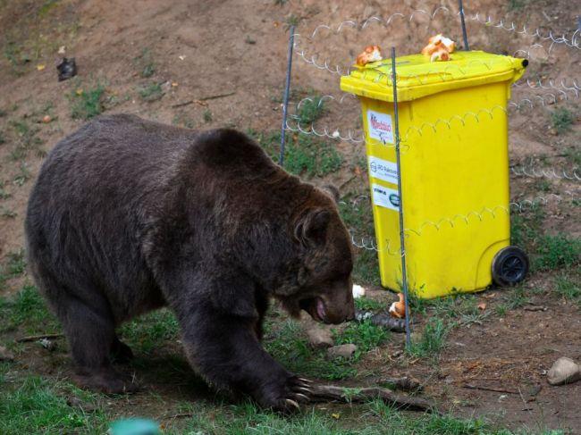 Medveď v košickej zoo počas experimentu napokon prekonal psychologickú bariéru